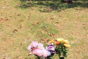 Grave Stone, Toowoomba, Qld
