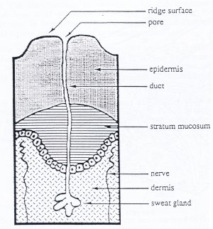 skin friction  Cross section of a friction