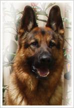 Police Dog CARTS