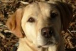 Police Dog WINSTON
