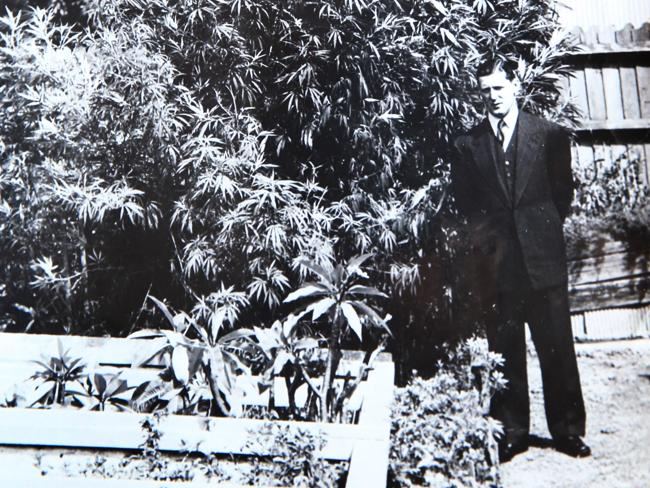 Harris stands next to a marijuana plant grown by the drug squad in an effort to better prosecute against its use.