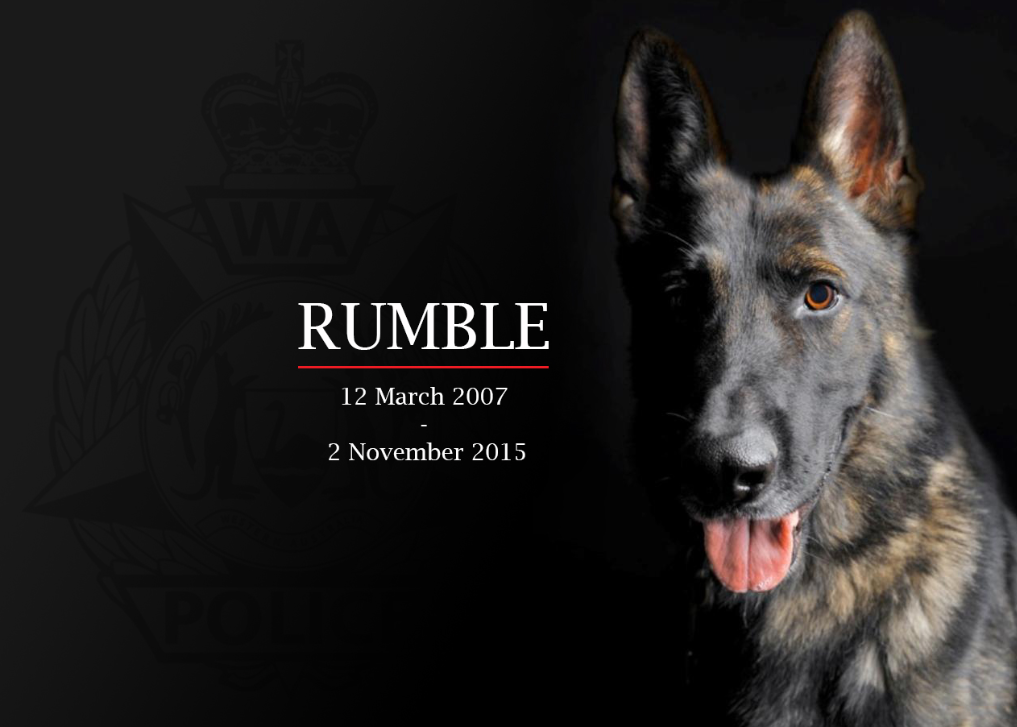 Rumble - WA Police Dog - died 2 November 2015