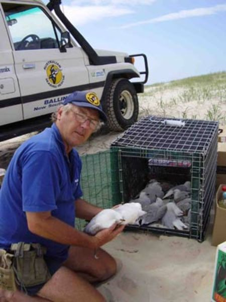 Lance Ferris from Australian Seabird Rescue collects dead birds from the beach areas of Evans Head. It is thought the birds died from botulism after eating dead fish.