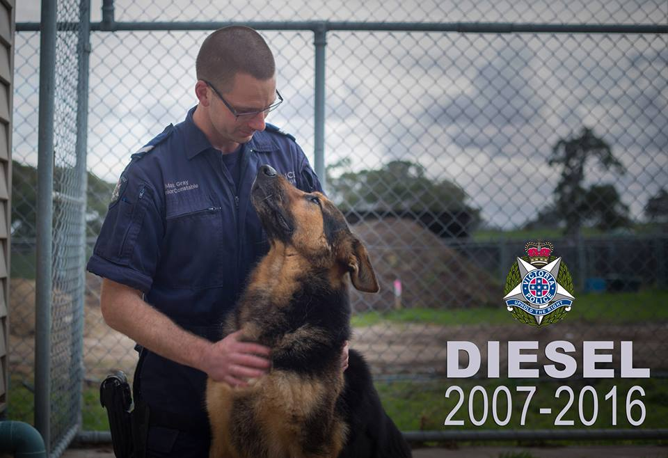 Police Dog DIESEL - VICPOL - Died January 2016